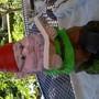 Our garden gnome