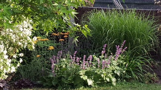 Salvia verticulata Purple Rain, Achillea Teracotta, Miscanthus Ferner Osten