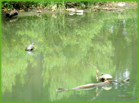 Can You See Turtles?