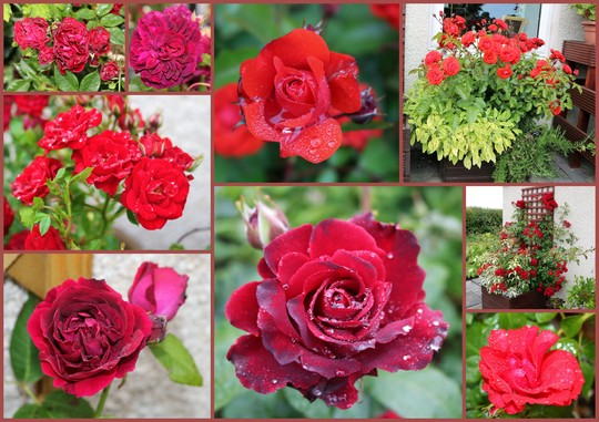 My Love Is Like A Red Red Rose