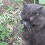 IMG 7626-Sampling the catnip!