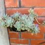hanging succulents-mom's garden June 08