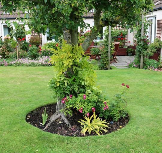 Wisteria from Rachel's Garden