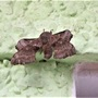 Poplar hawk moth, Laothoe populi