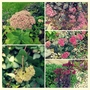 Sedum Collection....