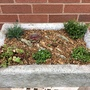 Newly planted alpine trough
