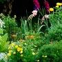 Compost Garden