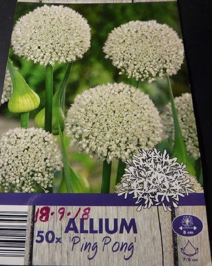 Allium 'Ping Pong'