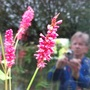 6a_reflection_and_persicaria_amplexicaulis