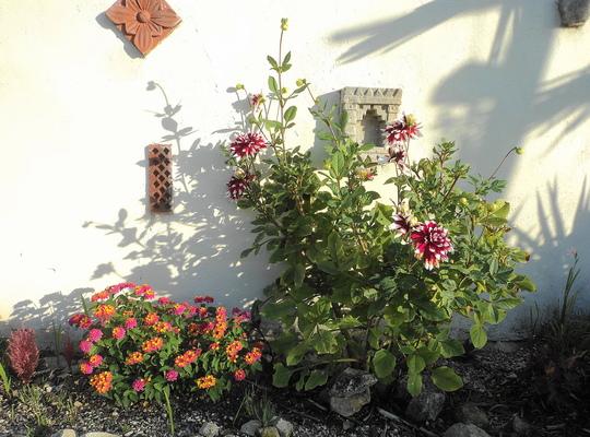 Hesperanthus (bottom right) (hesperantha)