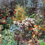 Autumn in the Conservatory border.