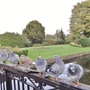 Pigeons in the park.
