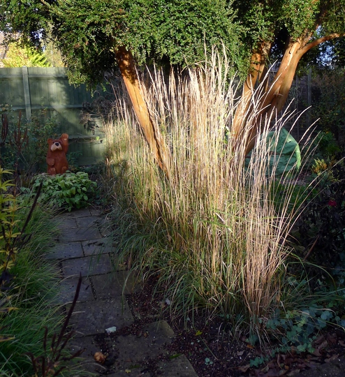 Sometimes the autumn light is just right (Calamagrostis x acutiflora 'Karl Foerster')