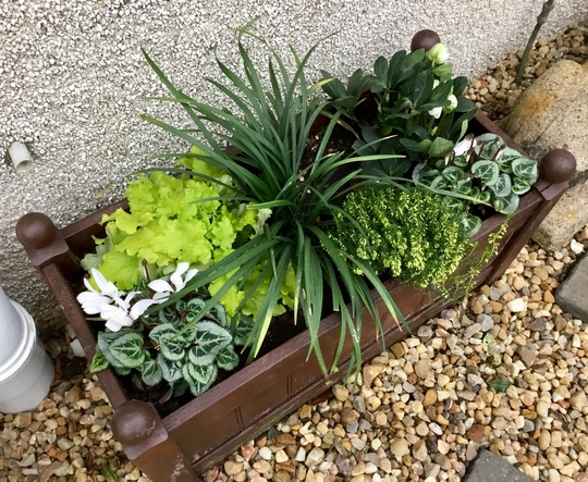 Newly planted container for winter.