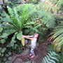 7 year old with 12 year old Birds (Eagle sized) Nest Fern (Asplenium australasicum (Birds Nest Fern))