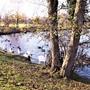 Lydney Park lake.