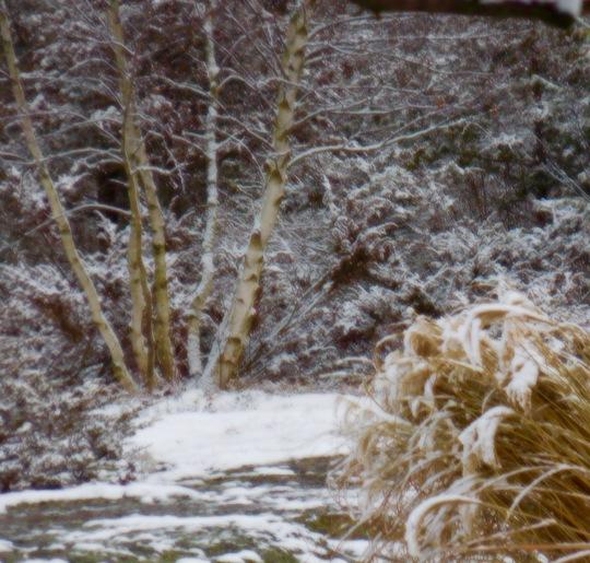 Snow since November