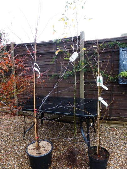 3 new trees delivered today