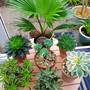 A table full of succulents...