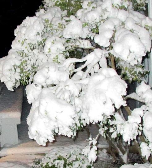 Lovely Snow