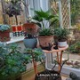 Succulent_corner....