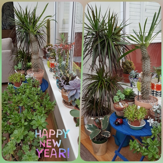 Conservatory in January......