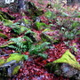 mouldering leaves, rocks with mosses...ribes bushes, very thorny.