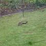 Hedgehog_5.2.19_