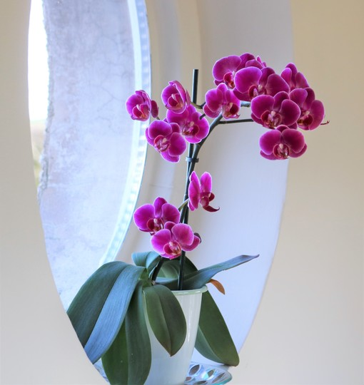 Little purple orchid on the circular window