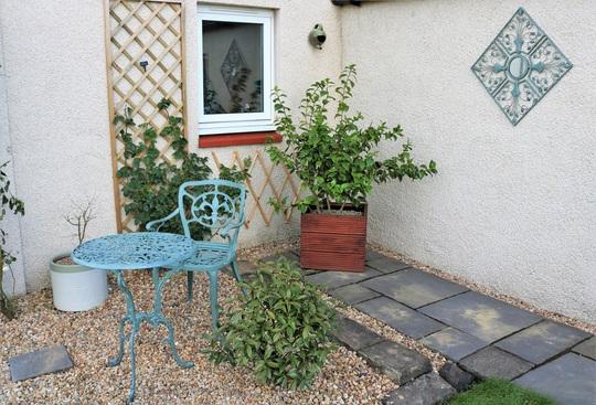 Camellia Corner ...