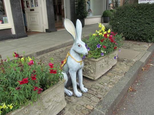 Hares in Farnham