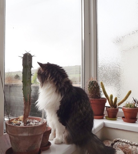 Bella keeps the cacti company until spring arrives :)