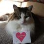 Jessie on Valentine's Day