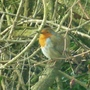 Little Robin seen through the car windscreen when we parked at Allestree Park.