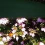 First Ladybird seen