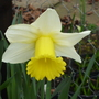 Un-named Narcissus