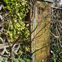 elstar bare branches in winter (Malus domestica (Apple))