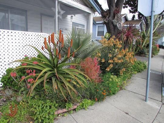 Front yard strip.