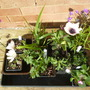 New 'alpine' plants