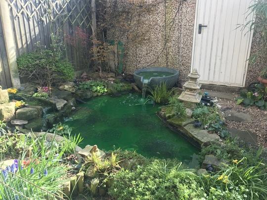 New pond (2018)