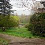pond view2