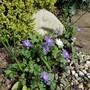 Ahead with flowers!!!!(. ❛ ᴗ ❛.)(ʘᴗʘ✿)(✿^‿^)