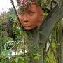 Female face planter..