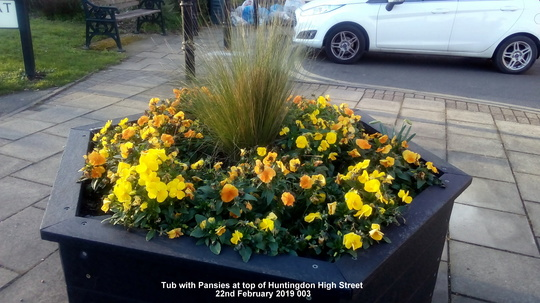 Tub with Pansies at top of Huntingdon High Street 22nd February 2019 003