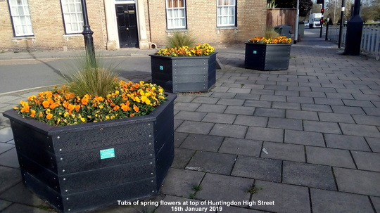 Tubs of spring flowers at top of Huntingdon High Street 15th January 2019