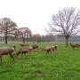 Woollaton Park, near Nottingham.