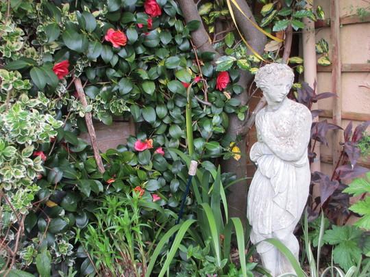 Siris in the corner (Camellia)