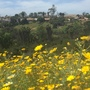 Super Bloom In San Diego (Super Bloom In San Diego)