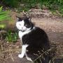 The Great Cat Pan!