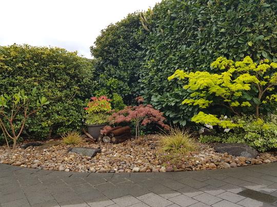 My tiny front garden